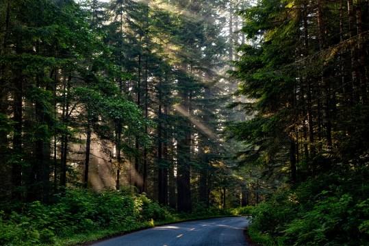 trekking nelle foreste della California