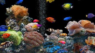 Photo of Conheça AquaSpace, o aquário da Nintendo!
