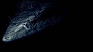 Photo of Novo adventure de sobrevivência e suspense, KONA já está disponível