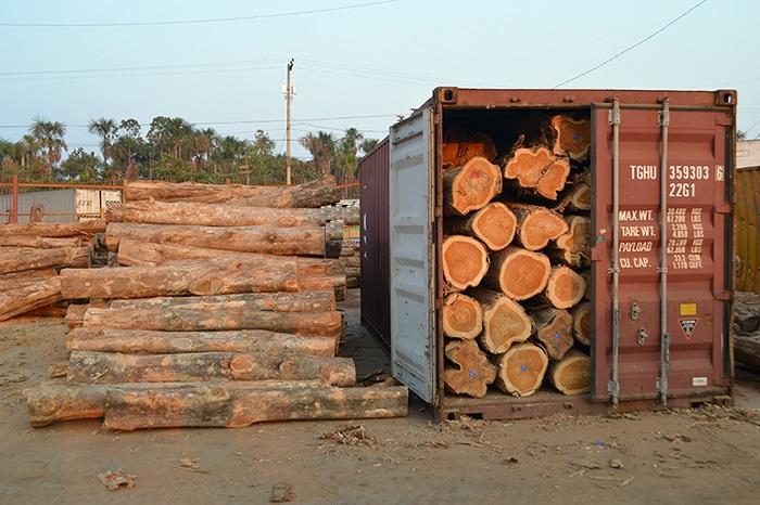 Resultado de imagem para madeira em tora exportação