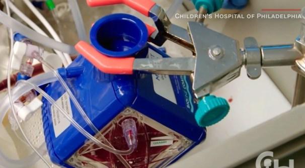 Sistema de 'circulação sanguínea' do útero artificial