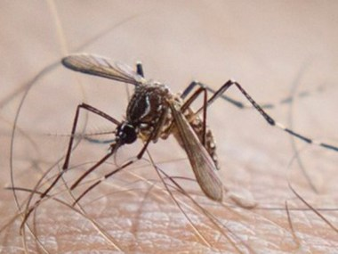 Casos Chikungunya