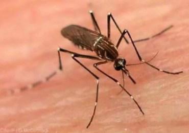 Manaus sedia conferência internacional sobre malária