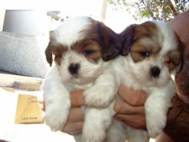 Abertas inscrições para doação de cães e gatos no interior paulista