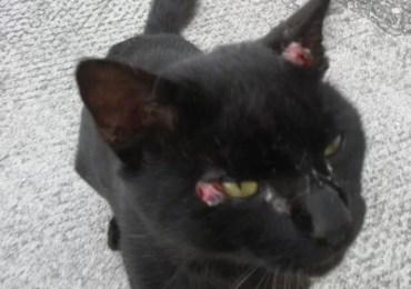 Rio registra 824 casos de esporotricose em gatos