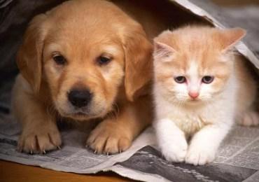 Câncer de mama em gatas e cadelas
