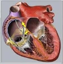Coração mata 350 mil brasileiros por ano