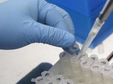 Vacina experimental protege contra Zika