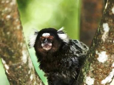 Paulo Afonso confirma primeiro caso de febre amarela em primata