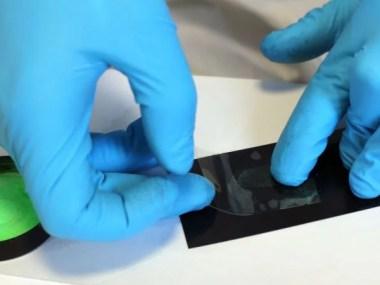chip detecta dengue