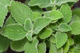 Plantas combatem a Dislipidemia