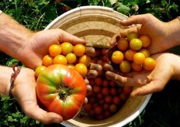 Agroecologia:segurança e soberania alimentar
