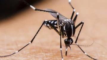 Pesquisadores criam teste que detecta zika de forma rápida e com baixo custo