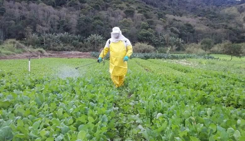 Agrotóxicos terão risco reavaliado pela Anvisa e podem ser retirados do mercado