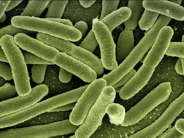Cientistas desenvolvem tecnologia para identificar bactérias e reação a antibióticos em meia hora