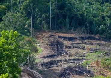Desmatamento da Amazônia aumentou 15% no acumulado em 12 meses, diz instituto