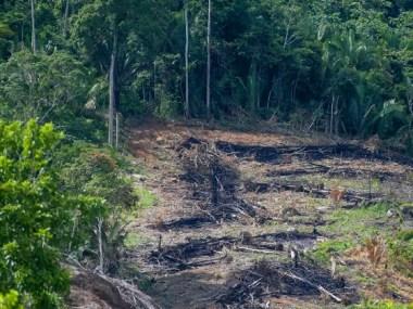Em carta aberta, servidores do Ibama listam medidas para impedir 'colapso da gestão ambiental federal'