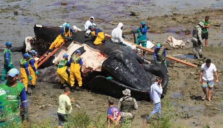 Prefeitura orienta moradores sobre aparições de animais marinhos nas praias
