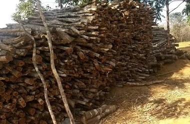 MP emite R$ 371 mil em multas por desmatamento na Bahia