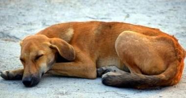 Salvador disponibiliza serviço de recolhimento e adoção de animais grandes