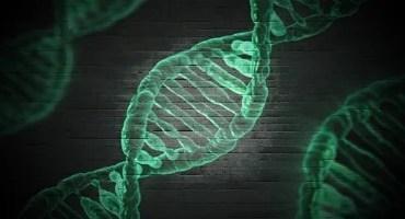 Pesquisadores do NIH geram sequência completa de cromossomos X humanos