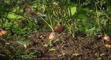 Desenvolvimento Sustentável da Agricultura
