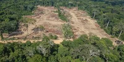 Polícia Federal faz maior apreensão de madeira ilegal da história do país