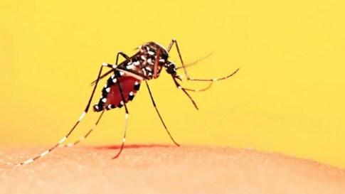 Resultado de imagem para febre amarela