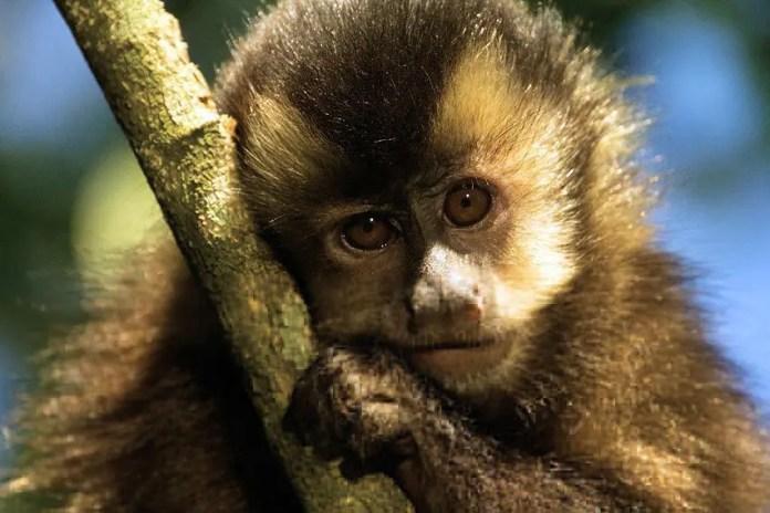 RESERVA SÃO FRANCISCO macaco