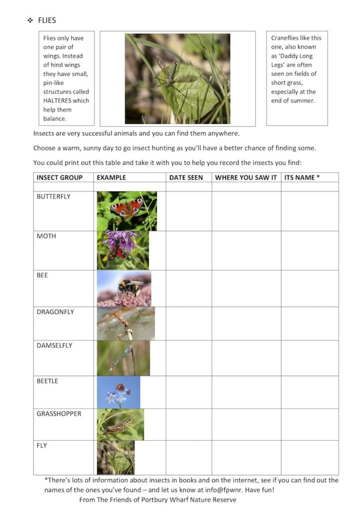 Insects worksheet 3