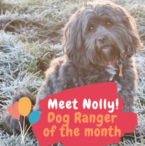Nolly our February Dog Ranger