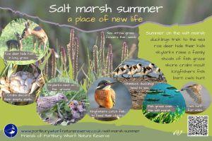 Salt marsh summer