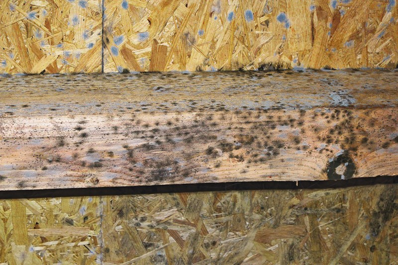 What Is The Best Way To Kill Black Mold On Wood