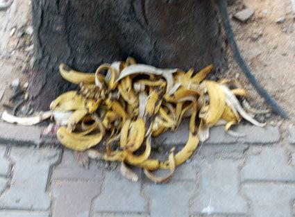 bangalore-bananas.jpg