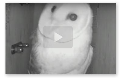 Video thumbnail of owl cam at night.