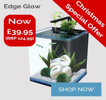 Edge Glow Offer