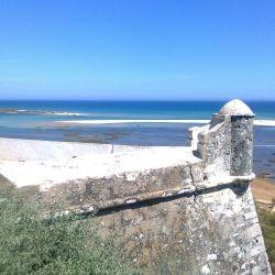 Wild Algarve Pictures