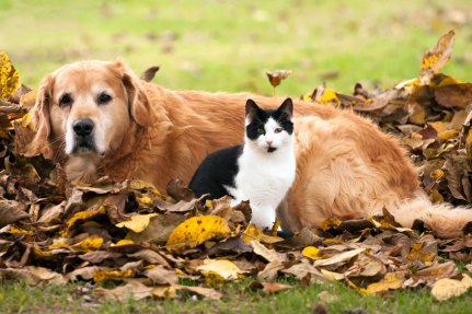 cat-and-dog-and-autumn-istock_1281x854