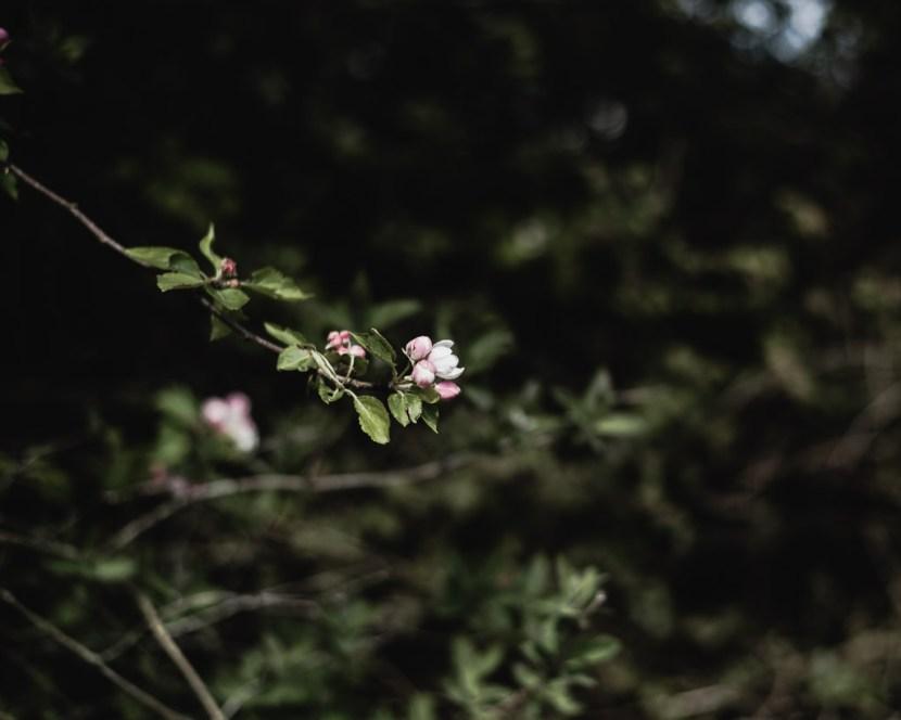 seasonal slow living blog post