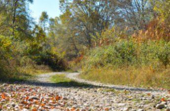 fall leaf path