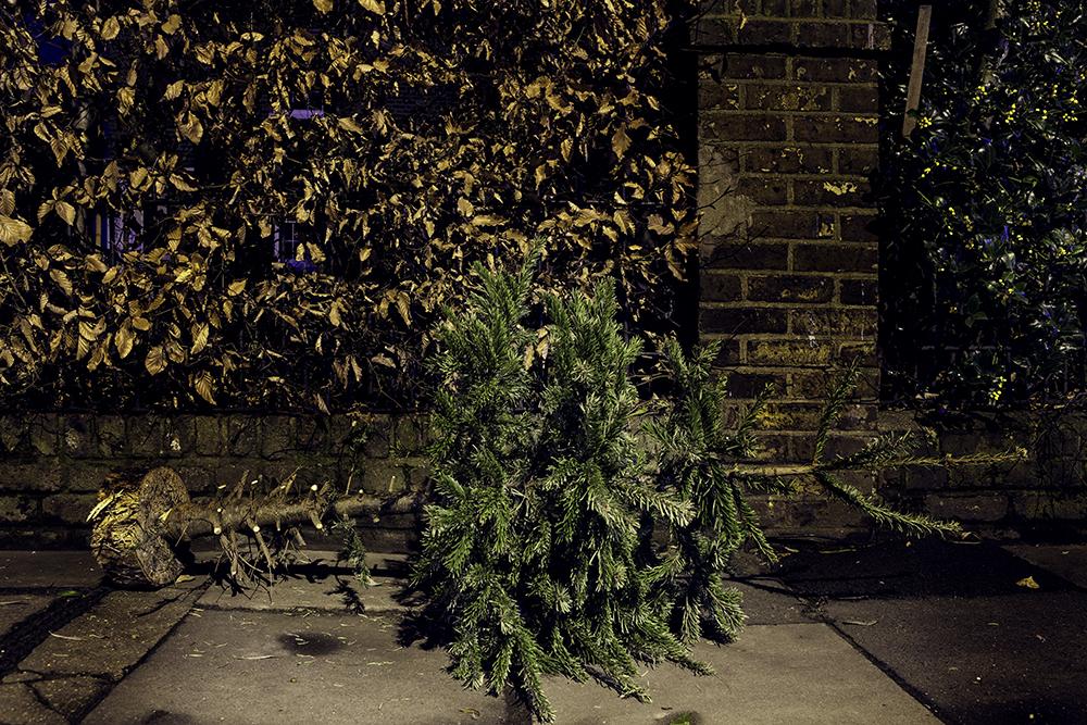 Christmas Trees 2