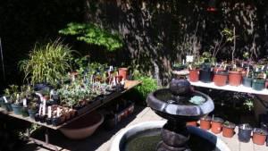 Petaluma Garden Club Plant Sale