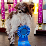 Peanut Winner of The 2014  World's Ugliest Dog Contest