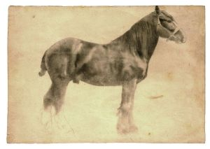 15_Plough-Horse21