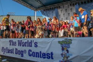 2015 World Ugliest Dog Contest