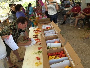 Tomato tasting at the Petaluma Bounty Farm.  Photo courtesy of Petaluma Bounty.