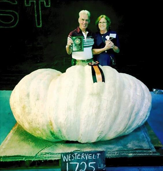 Westervelt Pumpkin
