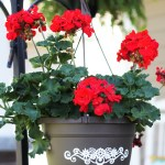 Vinyl-Embellished Hanging Baskets