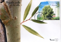 Bijela Vrba (Salix Alba) FDC