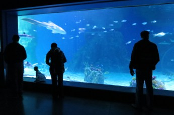 Outstanding Indoor Attractions in Utah